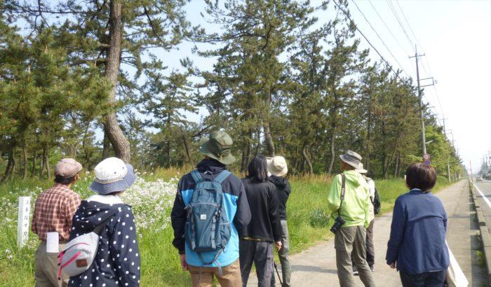 5月自然観察会