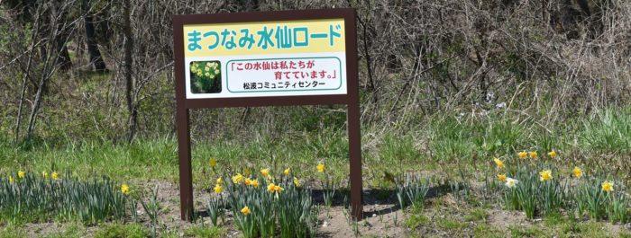 4月水仙ロード
